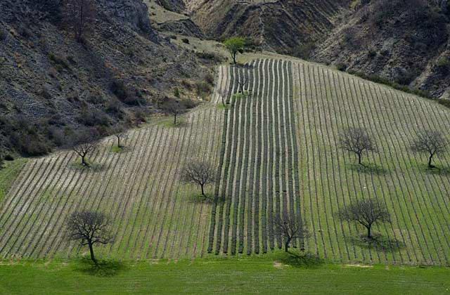 Arbres en hiver sans feuilles au milieu de sillons dans un coin de montagne